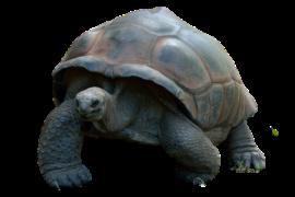 Tortuga galapagos Island Hopping