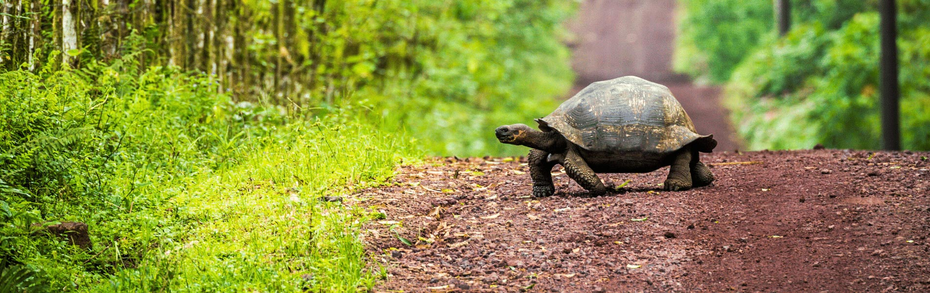 Galapagos Island Hopping West